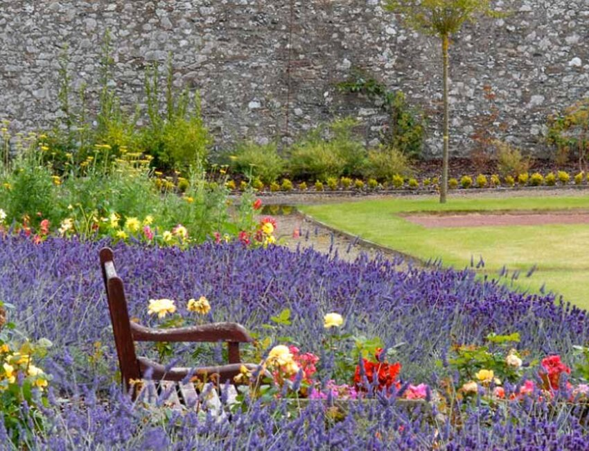 A bench surrounded by lavender in the Walled Garden